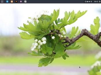 VirtualBox_Solus_18_04_2017_17_42_38.jpg